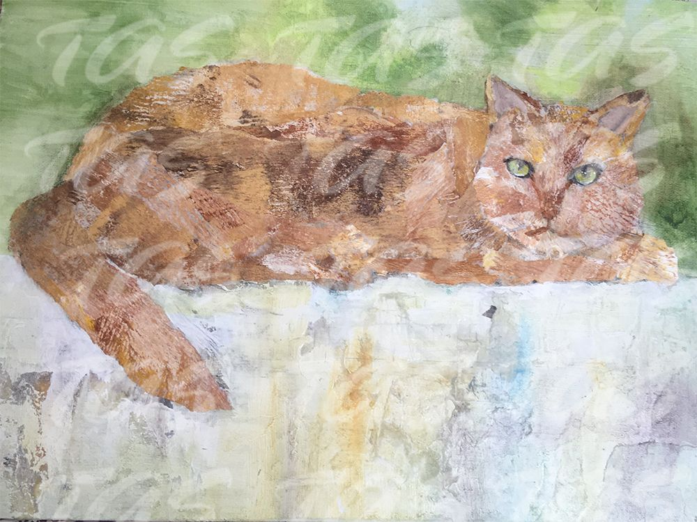 Cat on a Wall ©Margaret Mortimore
